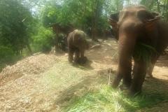 In-Thailand-120