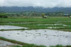 In-Thailand-170